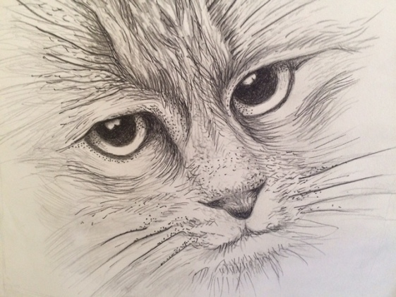 Obelia cat drawing 1