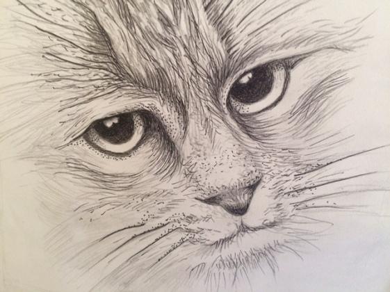 Obelia cat drawing 1